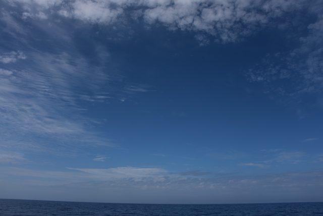 アオウミガメ記事3-2