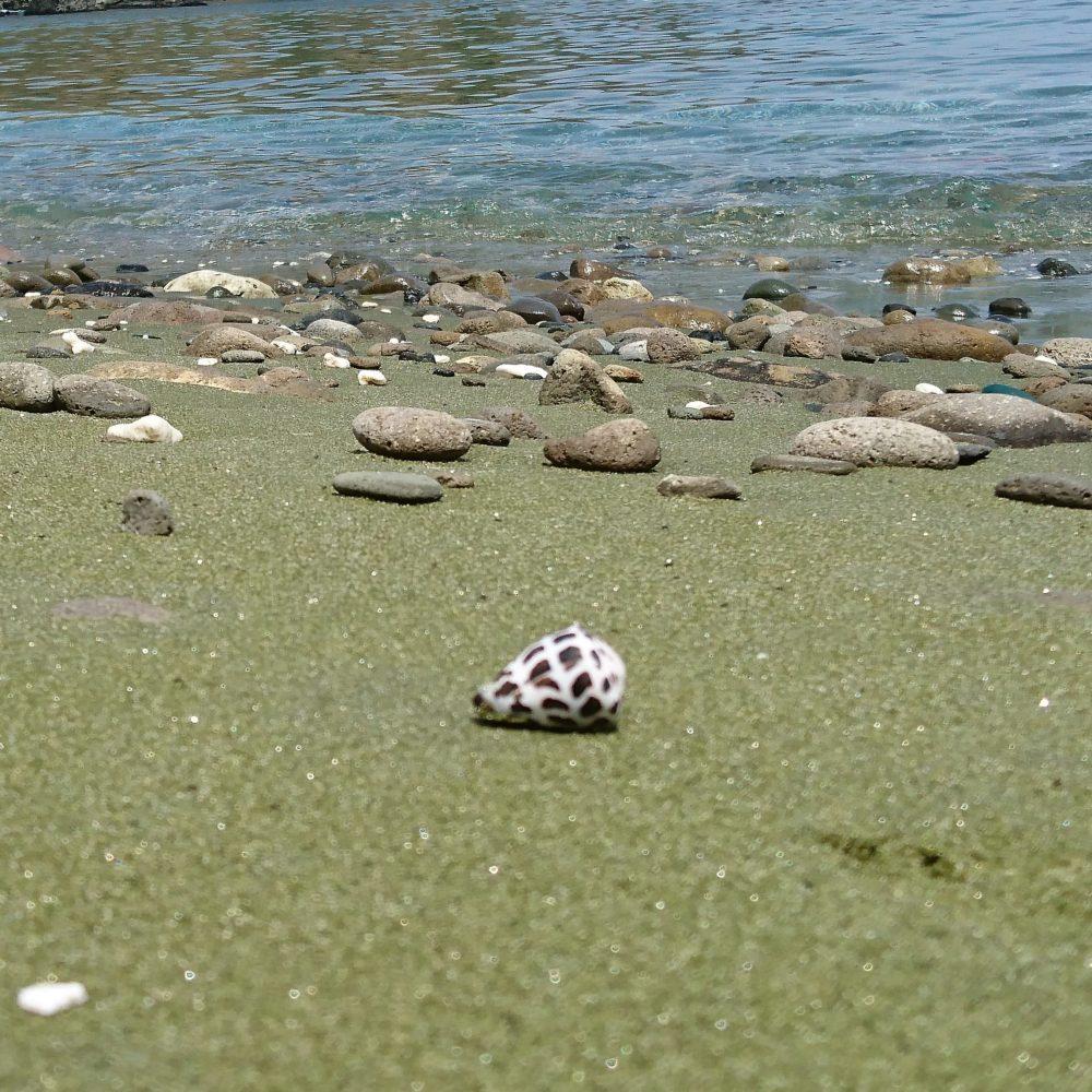 西海岸 緑砂の上のマダラ貝