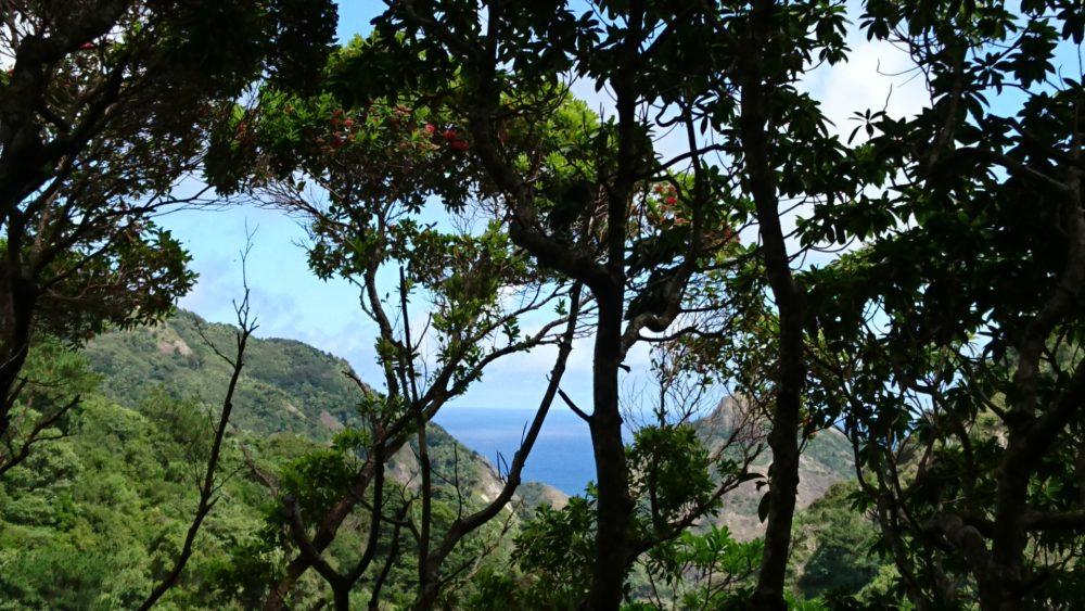 西海岸への道からのムニンフトモモの花と巽湾