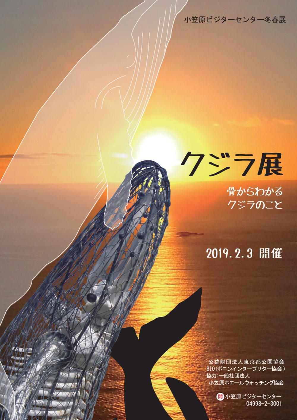 ザトウクジラ01