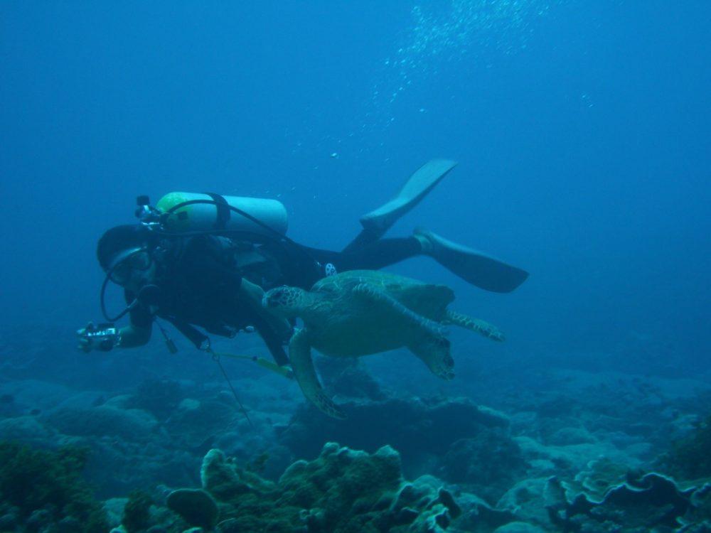 03アオウミガメ