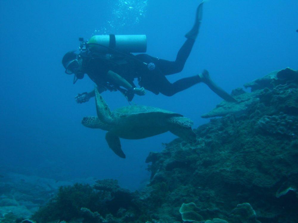 04アオウミガメ