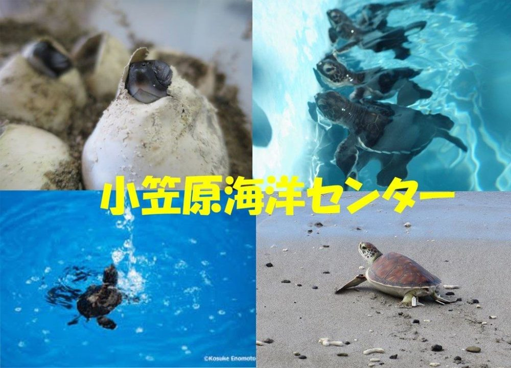 小笠原海洋センター11