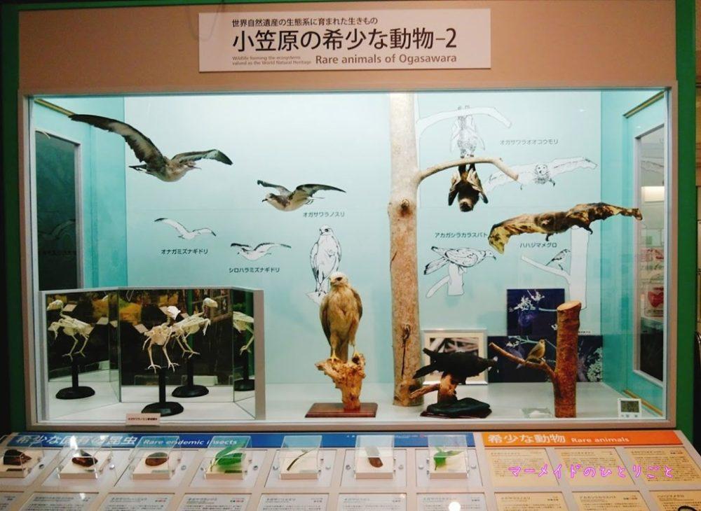 小笠原の希少な動物展示