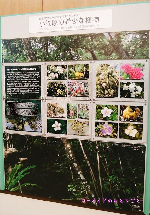 小笠原の希少な植物