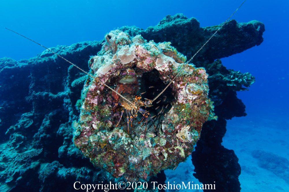沈船ダイビングバラ沈08
