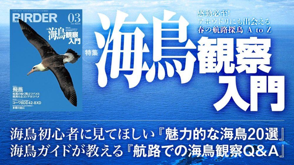 本birder01