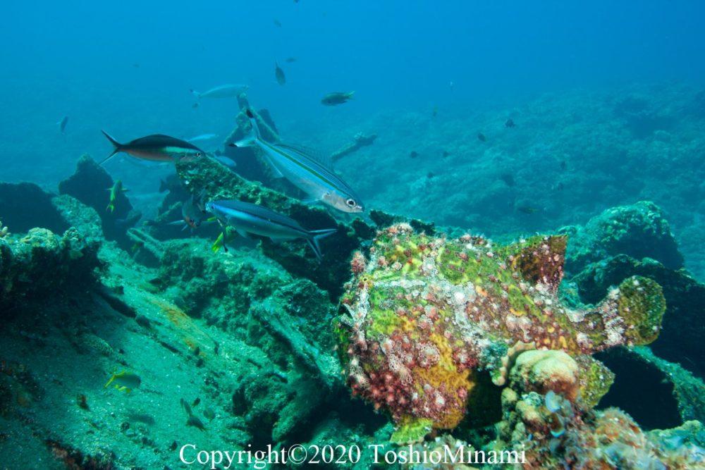 沈船ダイビングバラ沈12