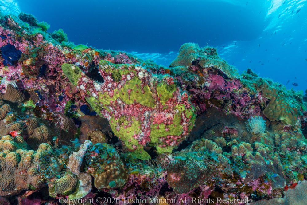 沈船ダイビングバラ沈11