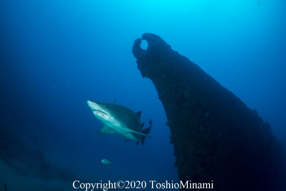駆潜艇とシロワニをどのように絡めて撮るかも楽しみの一つ