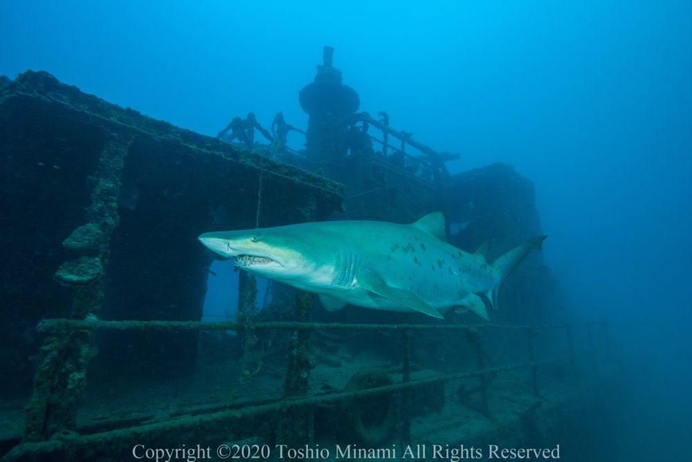 2008年に撮影した駆潜艇とシロワニ.まだブリッジ部分がしっかりと残っている
