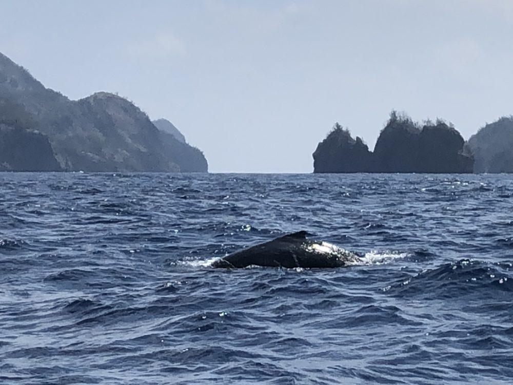 写真B ははじま丸からのクジラ