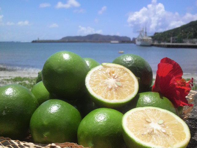 001 小笠原の太陽をたっぷり浴びて育つ島レモン(画像提供:JA小笠原)