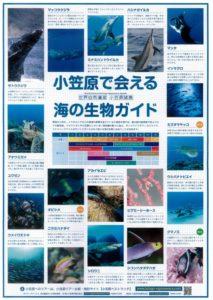 海の生き物ガイド表紙JPEG
